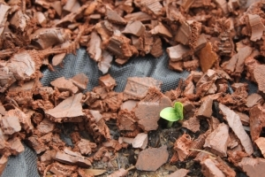 Seedling sprouting from rubber mulch on tarp