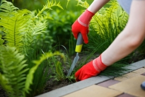 Woman digging up weeds from landscaping