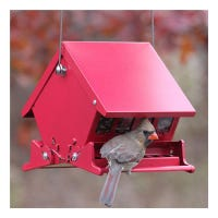 Absolute II Squirrel-Proof Hopper Bird Feeder, Mini, Holds 4-Lbs.