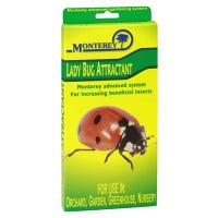 Lady Bug Lure