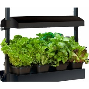 Image of Micro Grow Light Garden, Full Spectrum, Black
