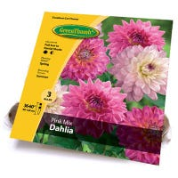 Dahlia Mixed Bulbs, 4-Ct.