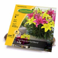 Lily Blended Bulbs, 6-Ct
