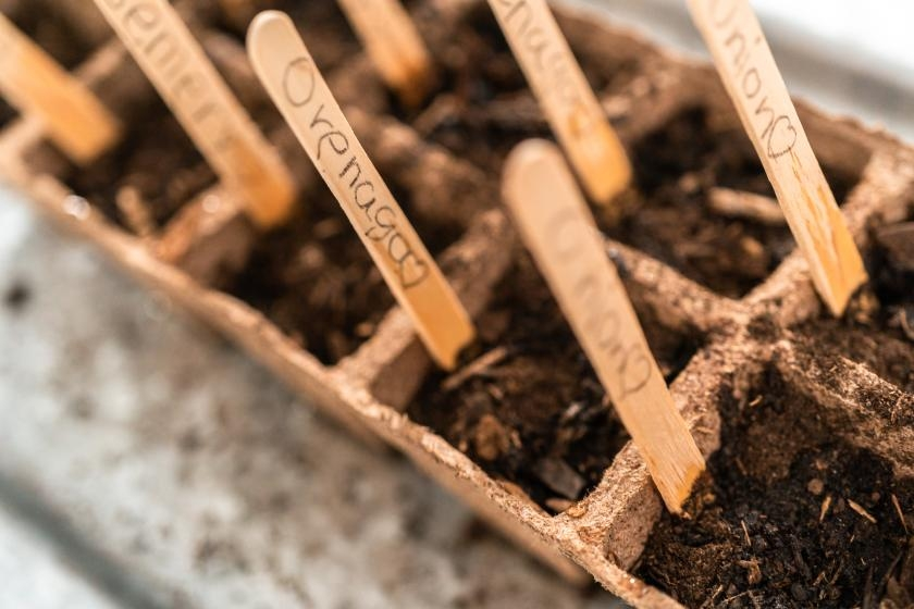 Plant markers made from popsicle sticks or tongue depressors