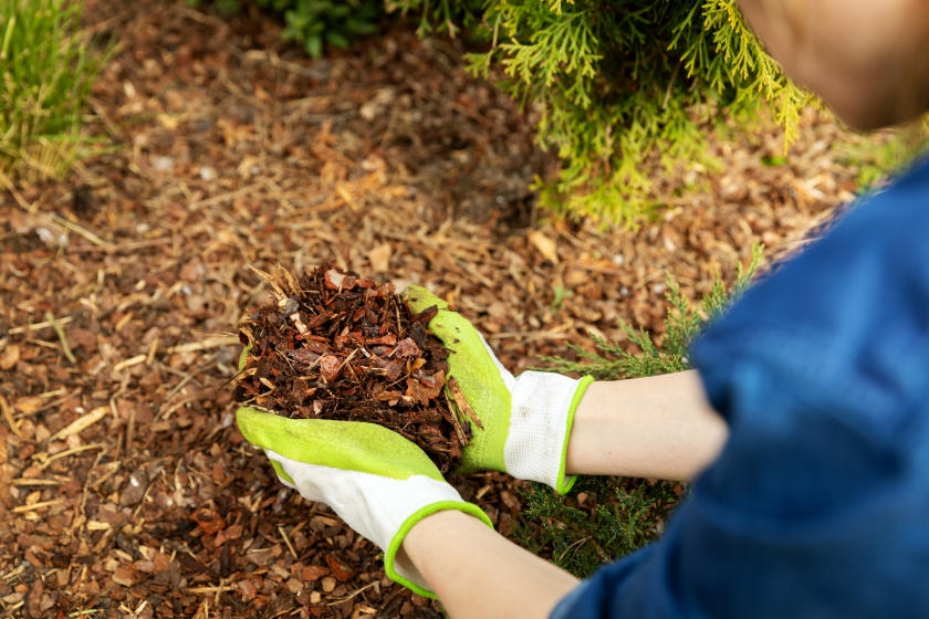 Woman laying mulch in landscaping