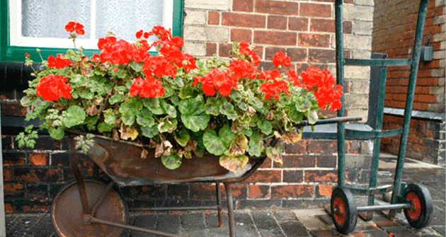 Flowers blooming in late summer window boxes