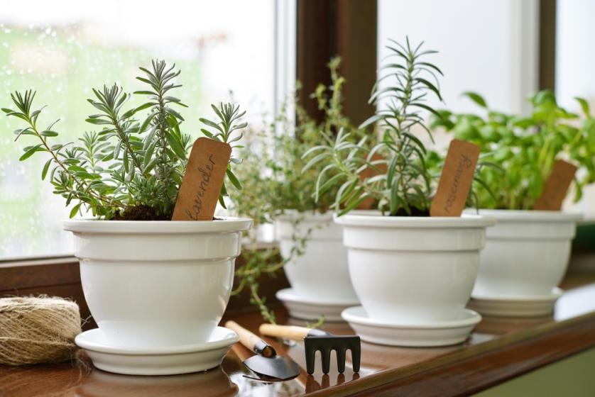 Herb garden in pots on window sill