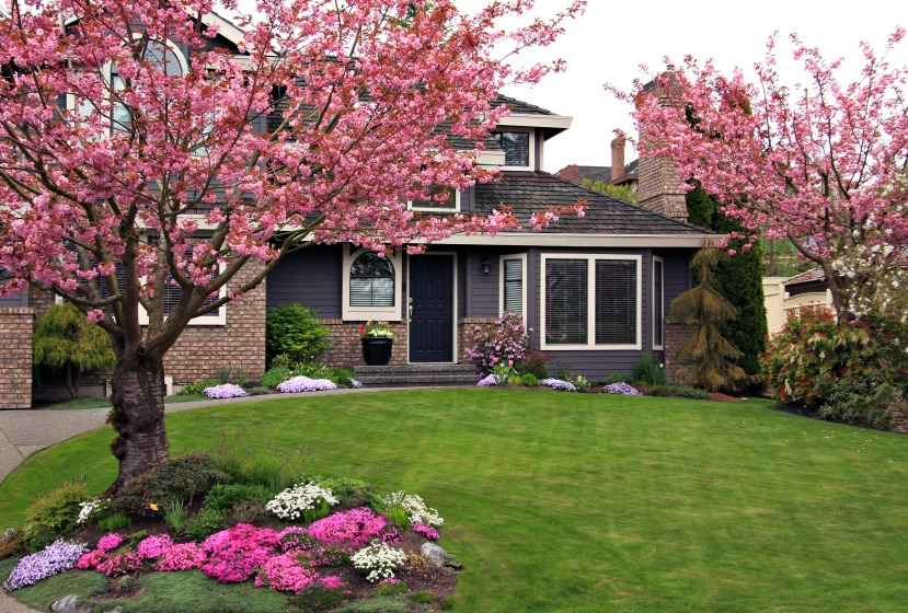 Front yard landscaping with cherry trees