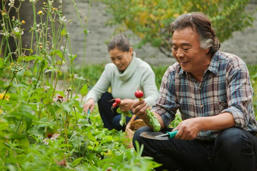 Harvesting vegetables from extended growing season