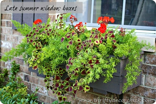 late summer window boxes