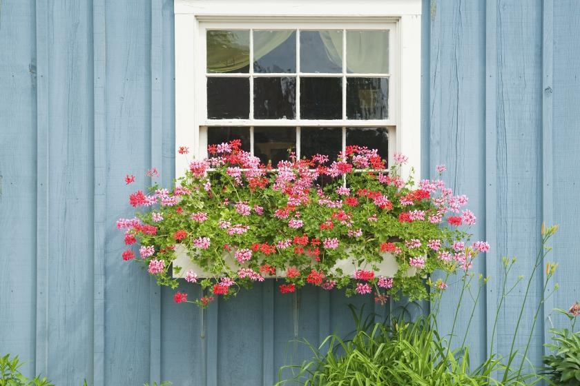 Wooden window planter box filled with flowers