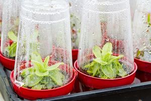 Learn how to build a simple indoor greenhouse with your kids
