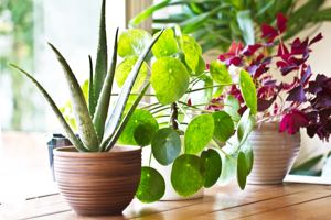Learn how to care for indoor plants