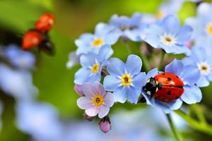 Learn how to attract beneficial insects to your garden