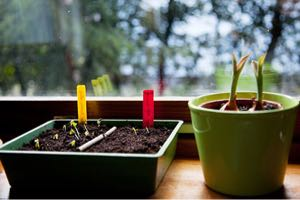 Learn how to start seeds indoors for spring gardening