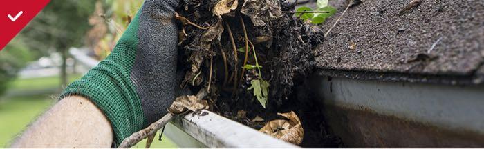 Clean debris from gutters