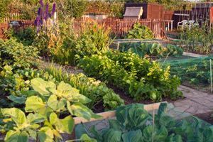 Learn how to plant an organic garden