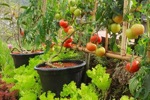 Learn how to grow a vertical vegetable garden